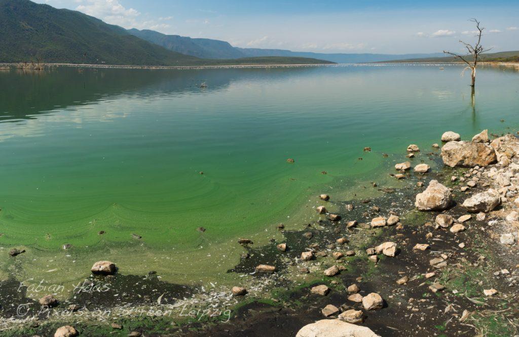 Fast ein Chemieunfall gedeihen nur wenige Algenarten im Sodawasser