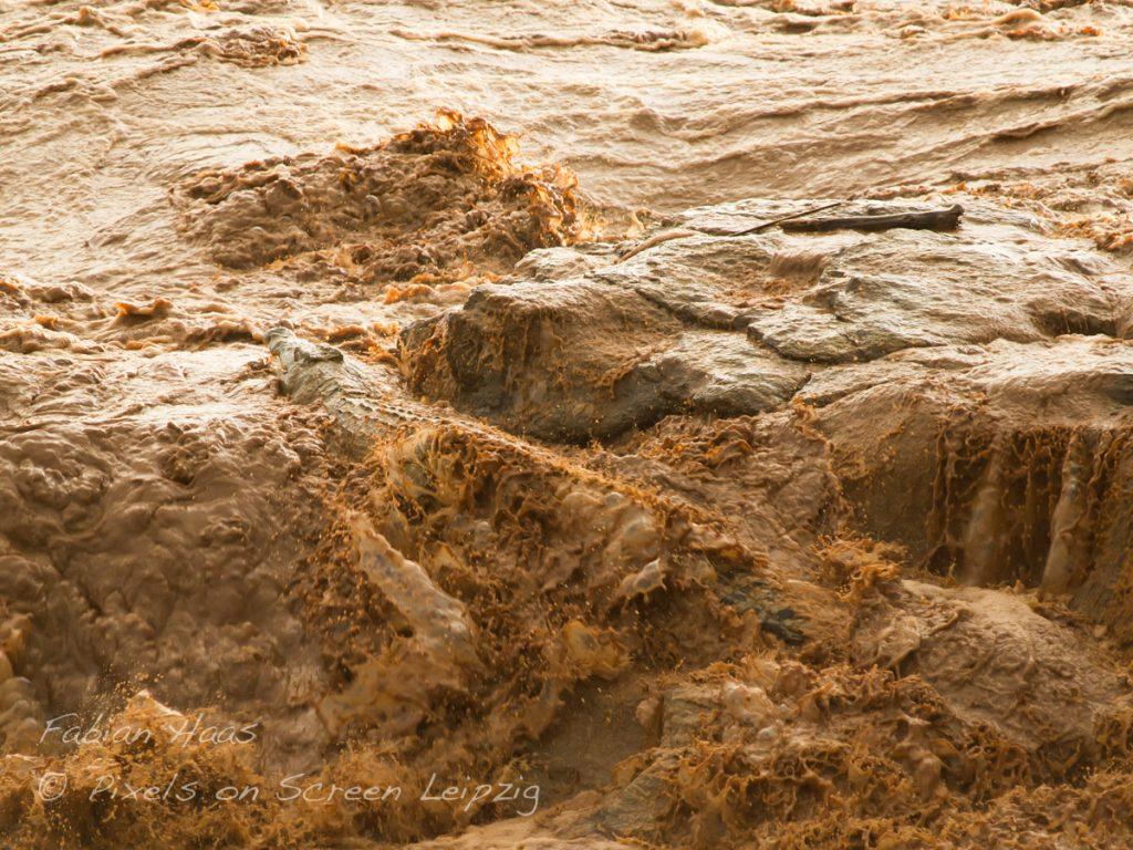 Ein Krokodil stemmt sich der Flut entgegen, Tsavo
