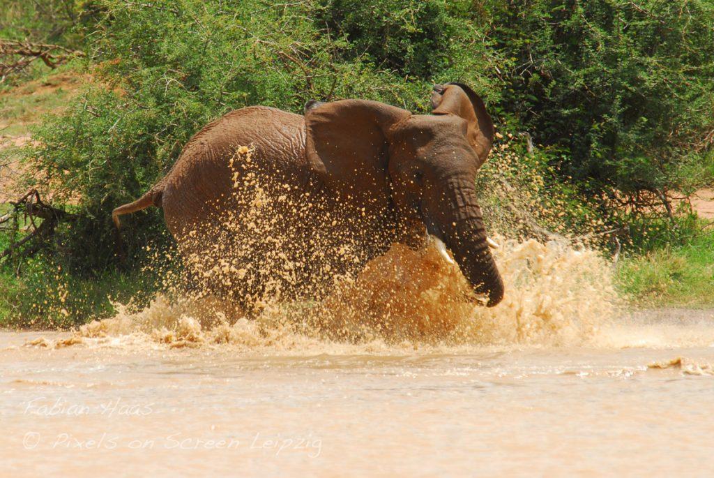 Elefanten planschen